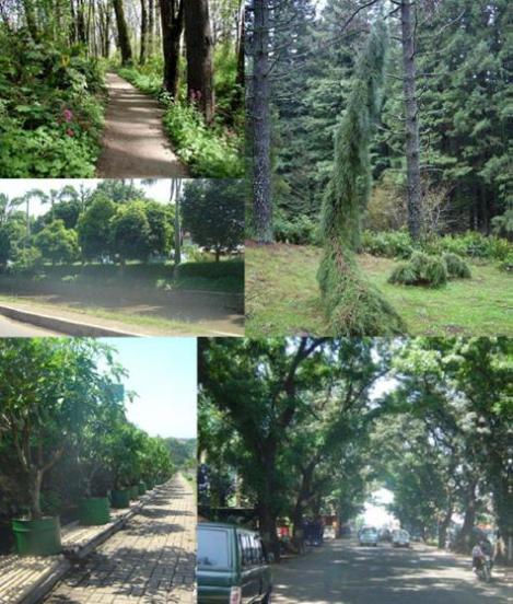 bentuk hutan kota