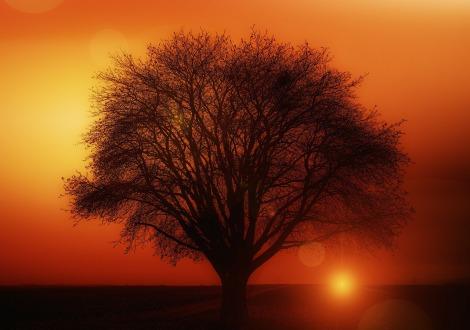 Pohon Tua © http://pixabay.com